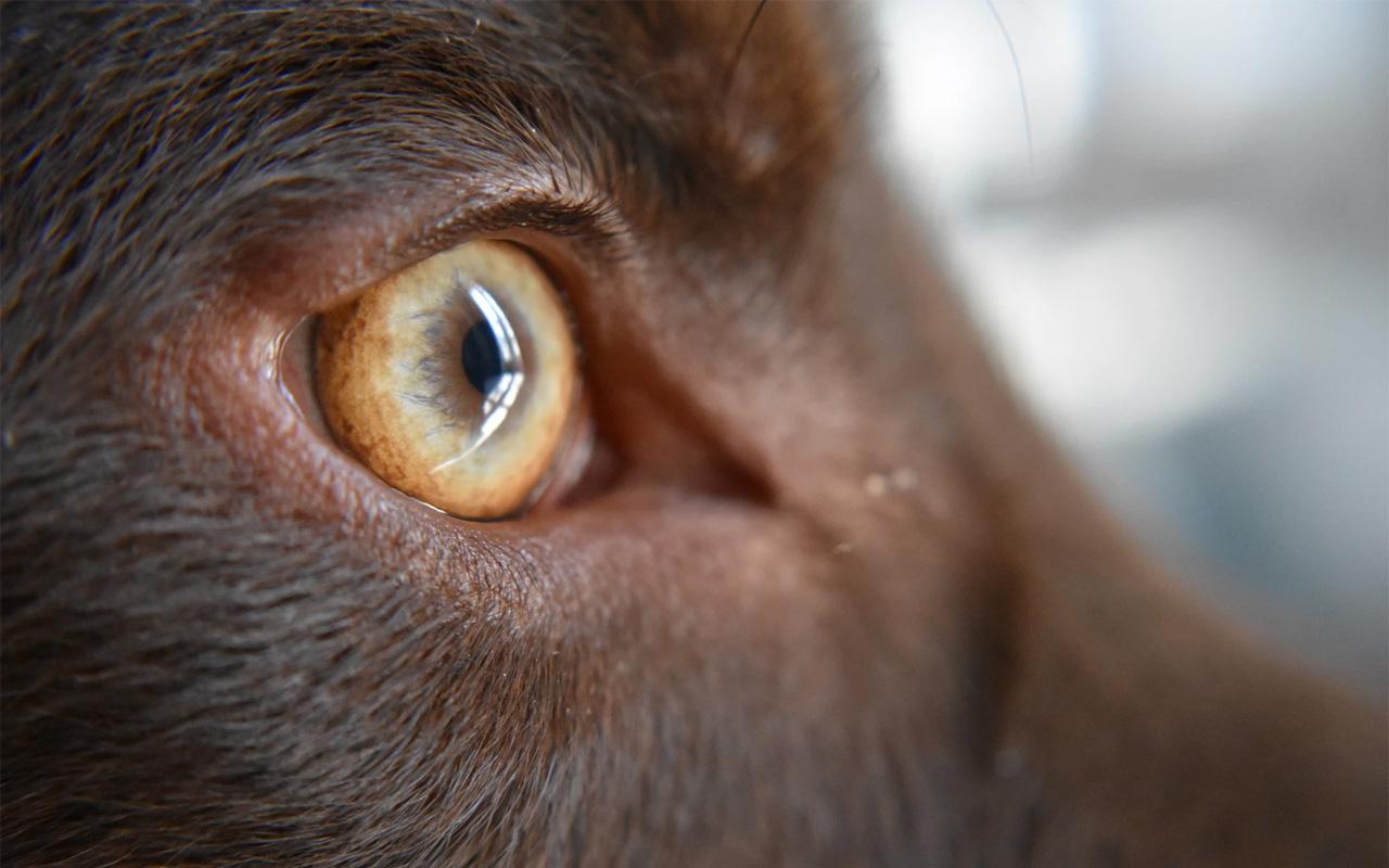 como ven los perros: la vista