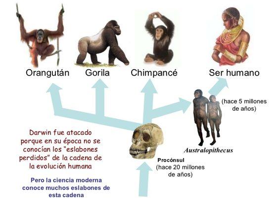 Evolución Hominoideos