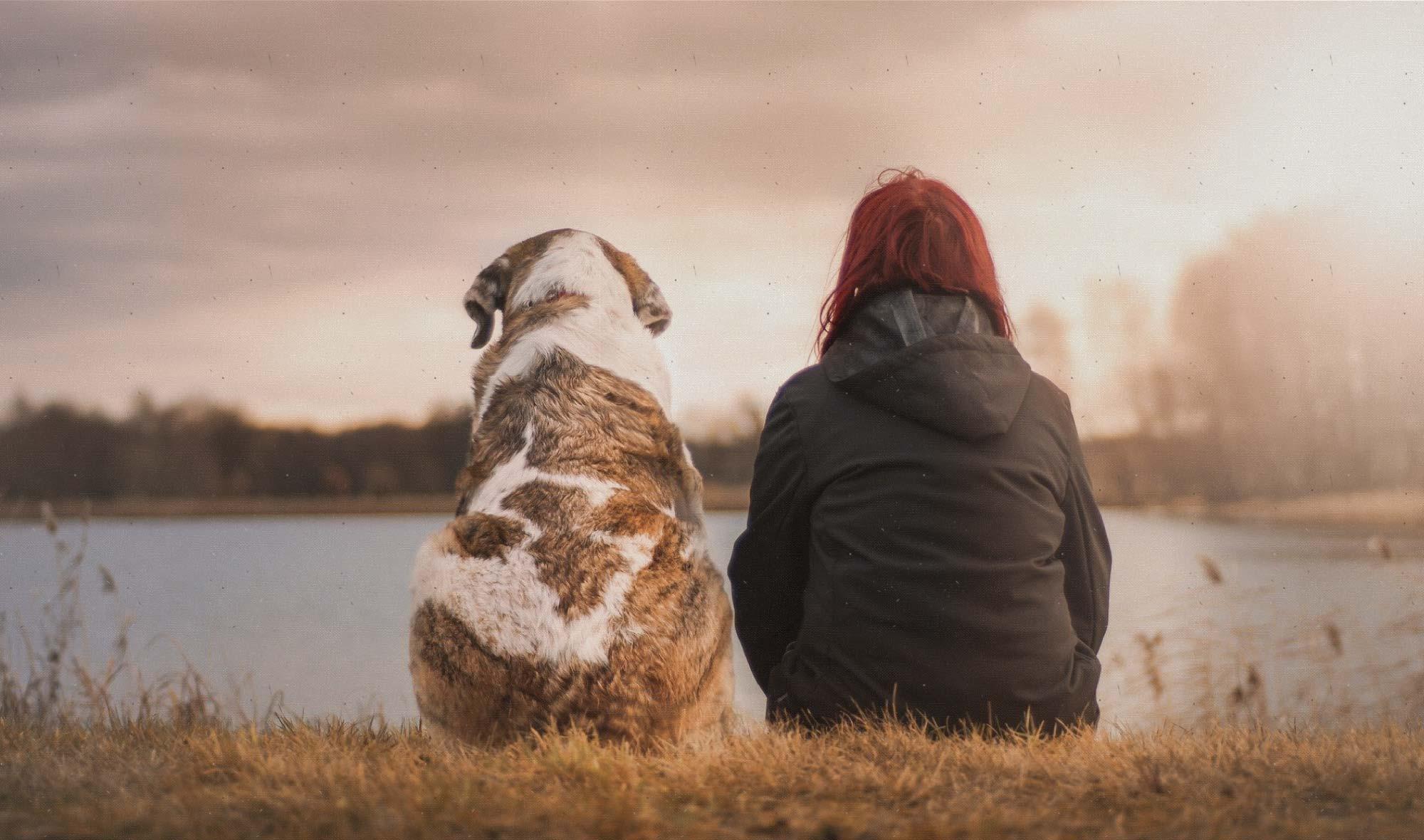 Diferencias-perros-personas