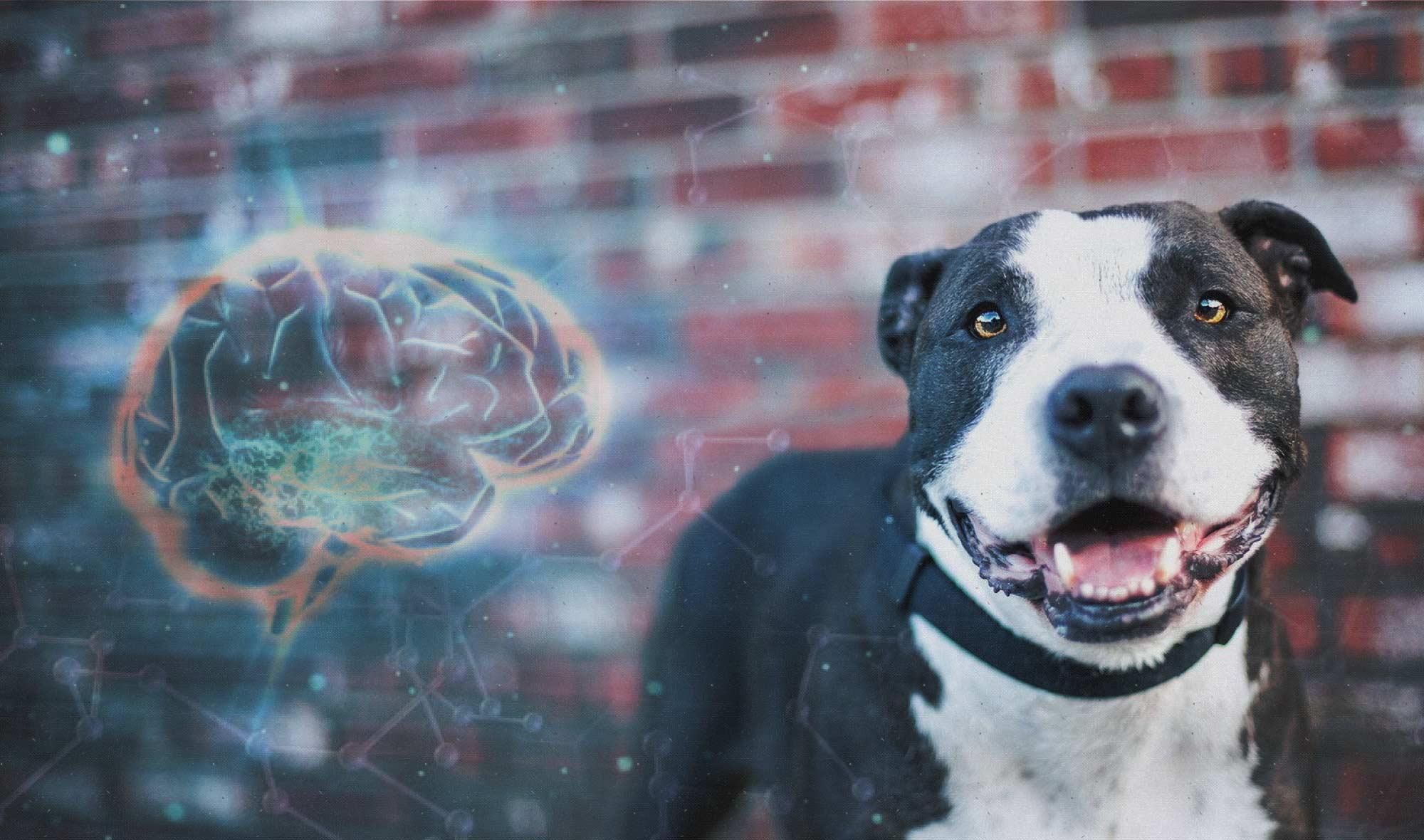 Cognicion canina