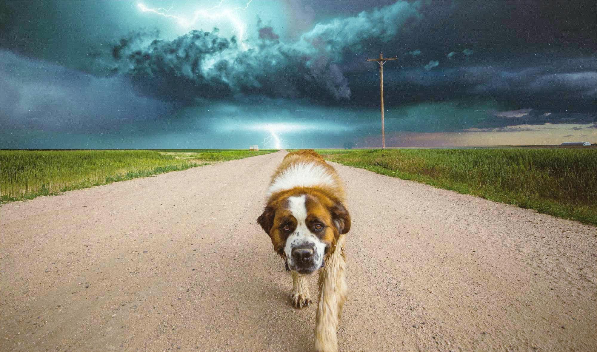 miedo-fobia-tormentas-petardos