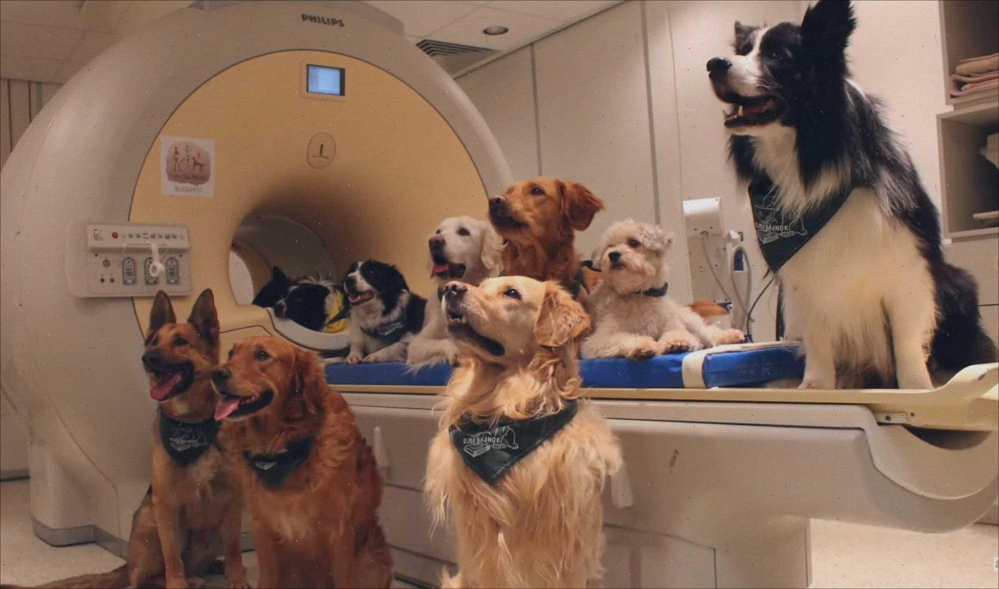 Ictus en perros