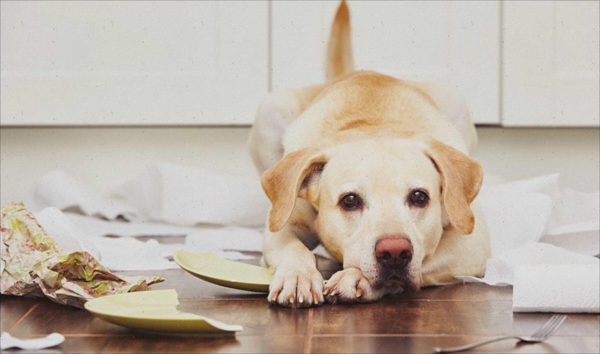 12 razones por las que tu perro puede desarrollar problemas de comportamiento