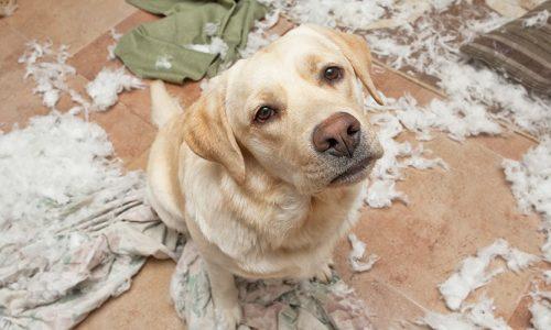 Por qué no castigar a un perro