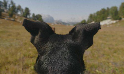 Perspectiva-canina