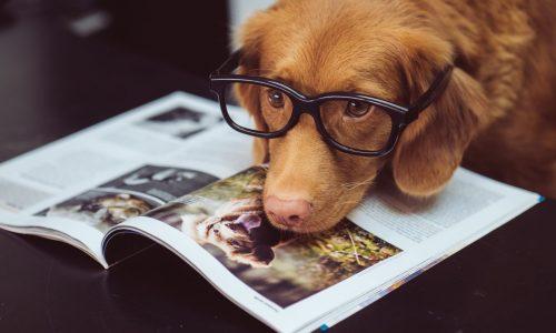 Formulario de Contacto Hablando Canino