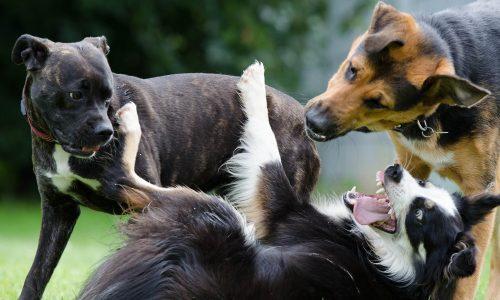 Sobre perros dominantes